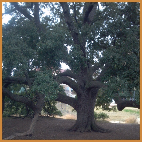 Austin Tree of the Year 2008