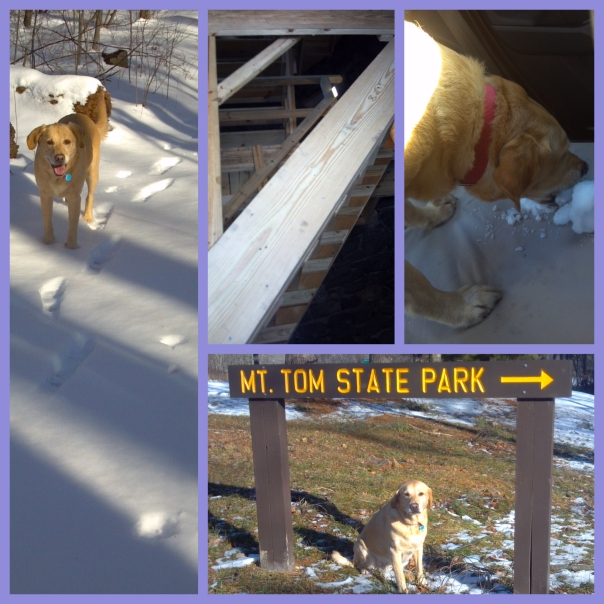 see how steep the stairs are?  And also Taz was thirsty after the hike so indulged in some snowballs!