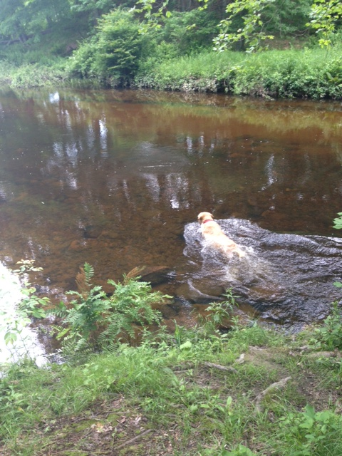 taz swimming