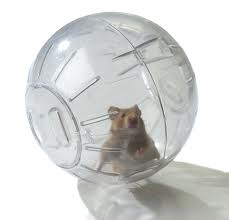 paul in the ball