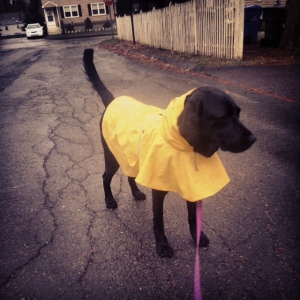 Zoe in her rain jacket.  The picture doesn't fully depict the amount of rain that was happening.